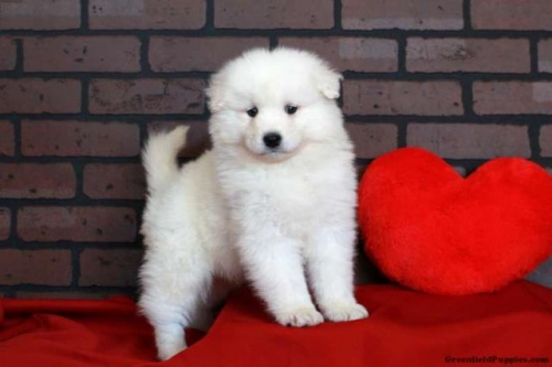 Puppy For Sale Near Me Classifieds On In All For Sale Pets Page 11