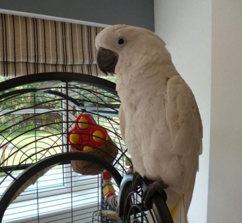 Macaw Parrots, Cockatoos, Grey Parrots And Fertile Eggs For Sale At Low Prices.