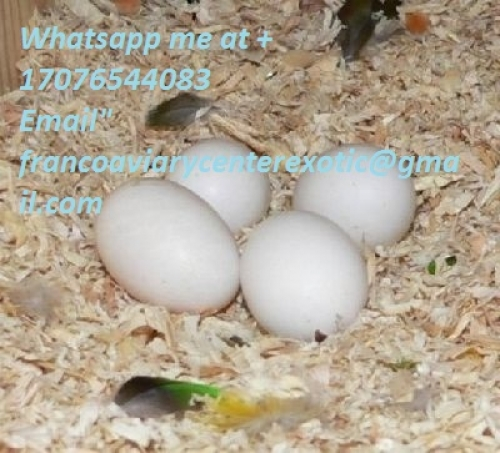 Fertile Parrot Egg Species
