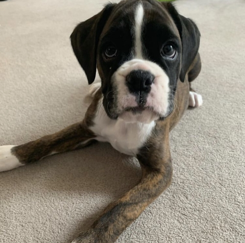 Puppy Needs A New Home